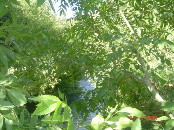 dsc00446-kasyan-fuadyusufoglu.JPG