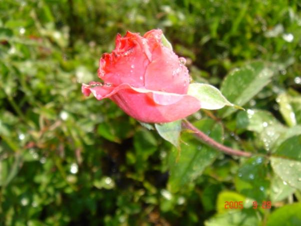 fuadyusufoglu_dsc017711-gul.jpg